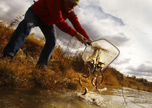 Article: Proposed fishing regulation changes address walleye, pike, bass and others