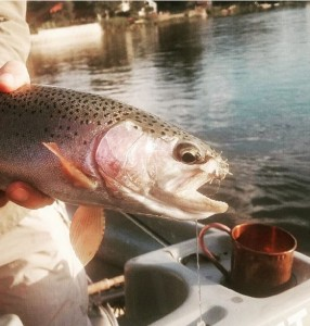 Fishing Report August 2016