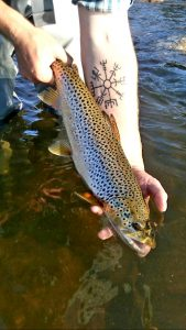 Grey Reef Fly Fishing Report