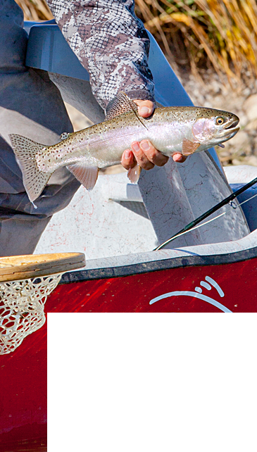 Professional Fly Fishing Guides found at Crazy Rainbow Fly Fishing