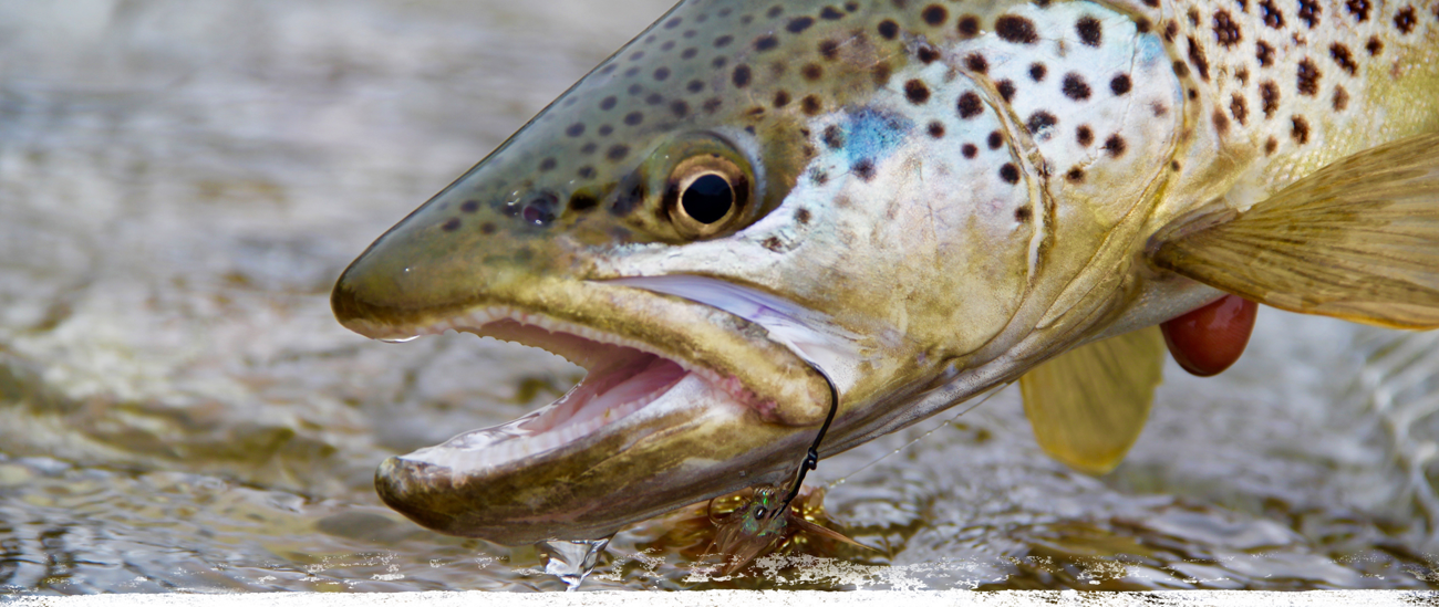 Recommended fly fishing tips by crazy rainbow casper wy for Casper wyoming fly fishing